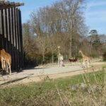 リヨン動物園|動物の種類と地図