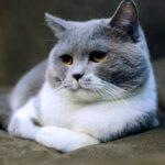 リヨンにある猫カフェ一覧