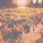リヨン旅行 - 10月の天気・気温・服装